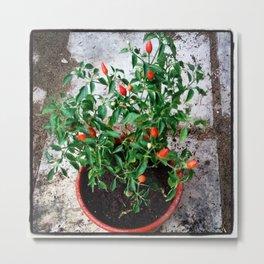 chilli Metal Print