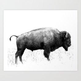Bison of Antelope Island Art Print