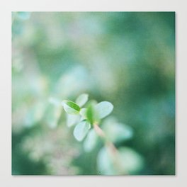 Leaves in summer Canvas Print