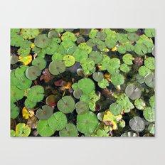 Lilipads Canvas Print