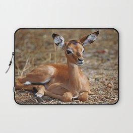 Very young Impala, Africa wildlife Laptop Sleeve