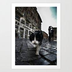 Street Cat Art Print