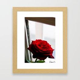 Rose of Valentine's day 2 Framed Art Print