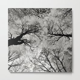 Meditative Power of Trees Metal Print