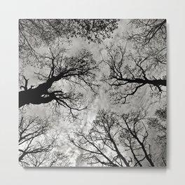 Meditative Power of Trees Metal Print