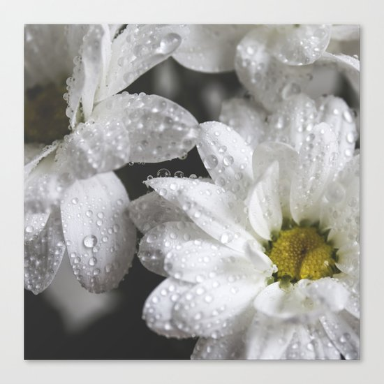 Daisies with drops Canvas Print