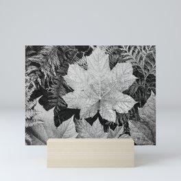 Ansel Adams - Leaves Mini Art Print