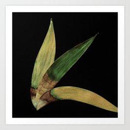 Three Eucalyptus Leaves: A Minimalist Perspective Art Print