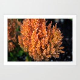 Orange Celosia Art Print