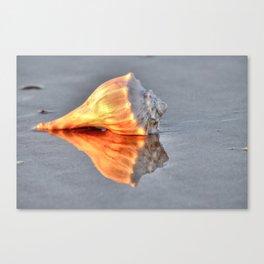 Whelk Shell Canvas Print