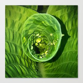 Spiral Drops Canvas Print