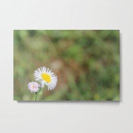 Little White Wildflower Metal Print