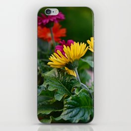 Spring Colors iPhone Skin