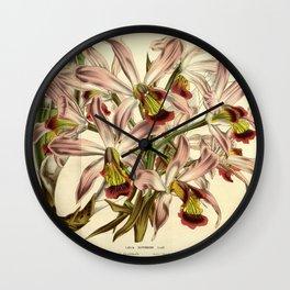 Flower laelia superbiens8 Wall Clock