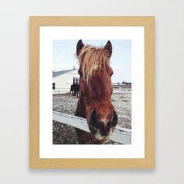 Brown horse face Framed Art Print