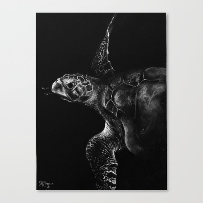 Olive Ridley Turtle Canvas Print