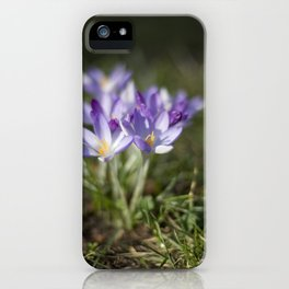Crocuses iPhone Case