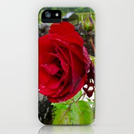 She, a Rose iPhone Case