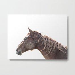Muddy Horse Metal Print