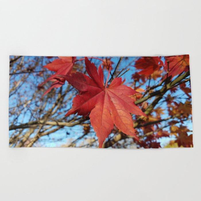 Maple leaf center stage Beach Towel