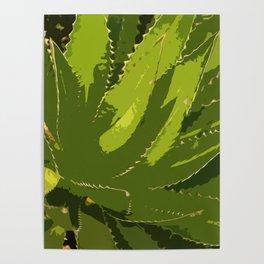 Sawtooth Leafed Aloe Vera Poster