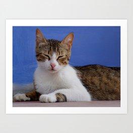 Greek Cat - Stella Art Print