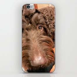 Bailey iPhone Skin