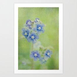 Comfrey Flowers Art Print