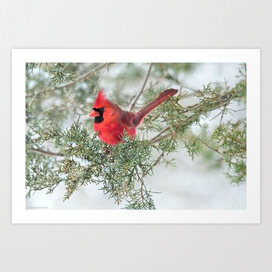 Cocky Cardinal Art Print