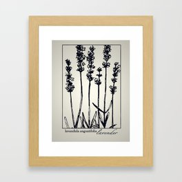 Lavender - Botanical Illustration Collection Framed Art Print