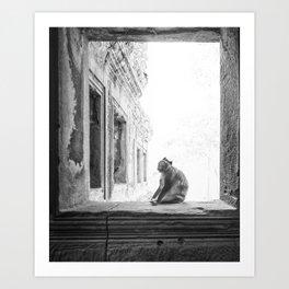 Sitting Monkey Art Print