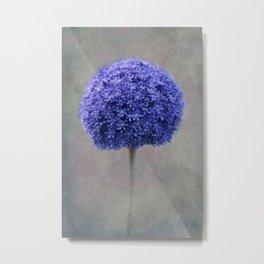 bue allium Metal Print