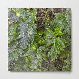 Luscious Green Rainforest Vine Metal Print