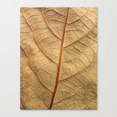 old leaf Canvas Print