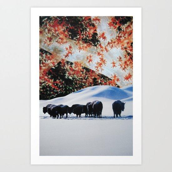 Buffalo Roam Art Print