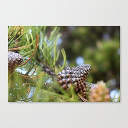 Christmas II Canvas Print