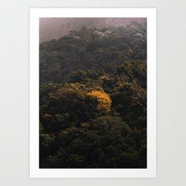 Tijuca Forest nº 19 Art Print