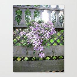 Purple Clematis Flower Vine Basking in Sunlight on a Wooden Garden Arbor Canvas Print