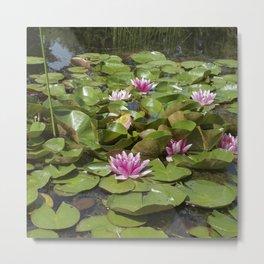 summer garden pond III Metal Print