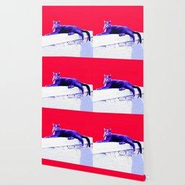 Blue Cat Wallpaper