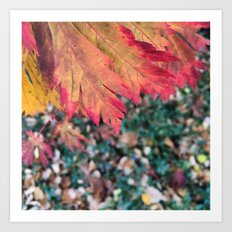 Fall Colors Square Art Print