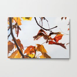 Autumn Sonata I Metal Print