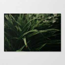 Rain on Grass Canvas Print
