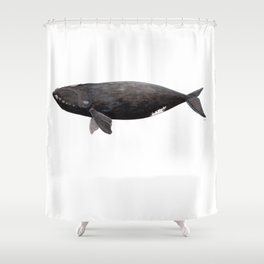 Northern right whale (Eubalaena glacialis) Shower Curtain