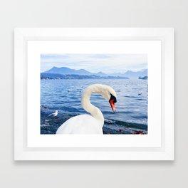 Swan & Alps Framed Art Print