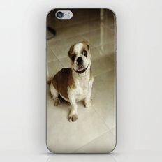 Eager Beaver iPhone & iPod Skin