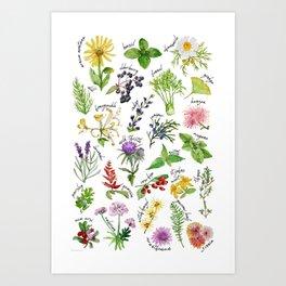 Plants & Herbs Alphabet Art Print