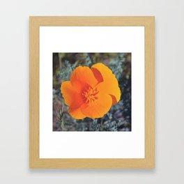 Golden Petals Framed Art Print