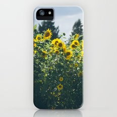 Sunflowers iPhone (5, 5s) Slim Case