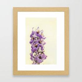Purple Larkspur Delphinium Flowers Framed Art Print